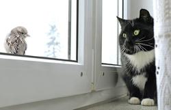 Cat watching bird on the window