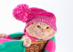 Cat wearing a pink knitting hat with pompom and a scarf lying in a basket