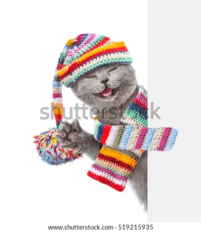 cat wearing a scarf and warm...