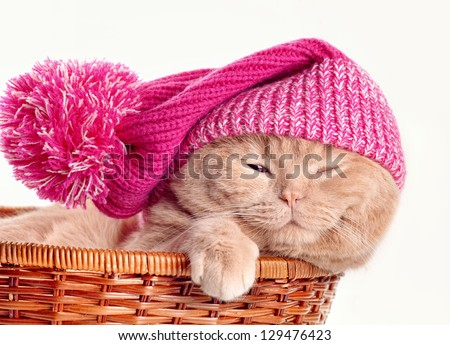 Cat wearing knit hat sleeping in a basket on white background