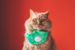 Cat wearing medical mask because of Coronavirus or air pollution or virus epidemic in the city. Place for text, Copy space