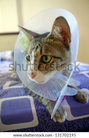 Cat wearing protective medical collar, sitting on bed.