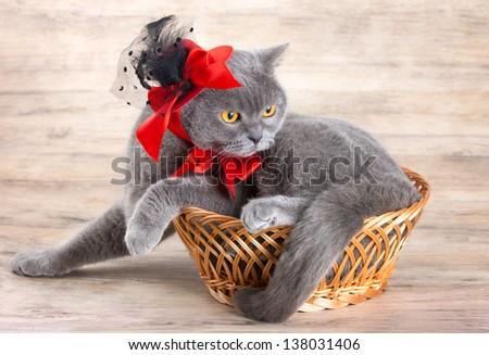 Cat wearing red hat lying in a basket