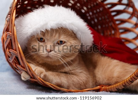Cat wearing Santa's hat lying in a basket
