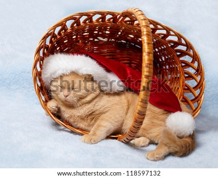 Cat wearing Santa's hat sleeping in a basket