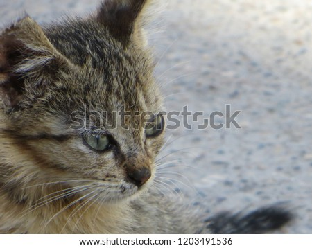 Cat whiskers focus #1203491536