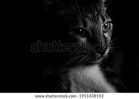 cat with a distant look. Light and shadow. Animal wanting to escape. love for cats. cat catalog. wild cats. cats models.