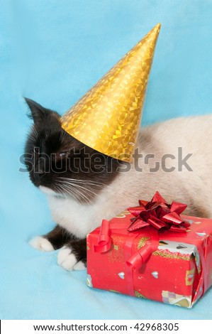 Cat with bow and cap on a blue background near the present