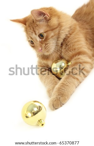 cat with christmas ball isolated on white background