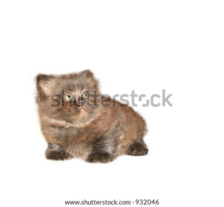 Cat (with clipping path)