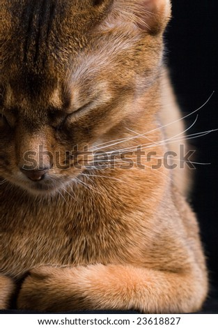 cat with closed eyes on black background