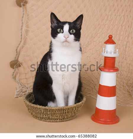 Cat with fishing gear