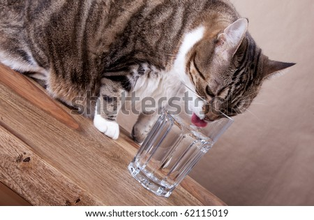 Cat with glass of water on table