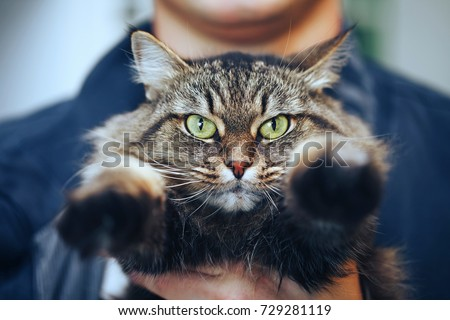 Cat with Green Eyes in Hands
