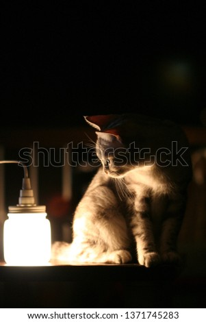 cat with lighting  #1371745283