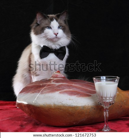 Cat with milk and a piece of meat