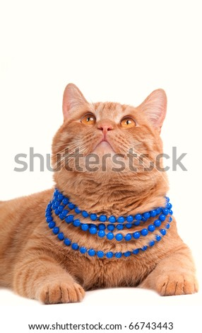 Cat with necklace looking up