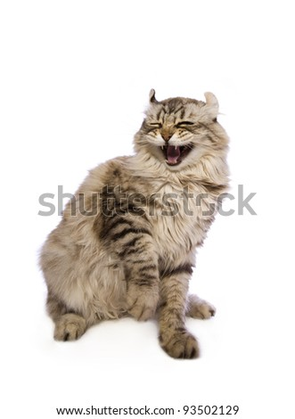 Cat with open mouth isolated on white background