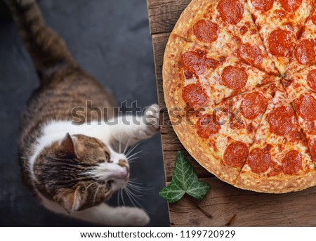 cat with pepperoni pizza