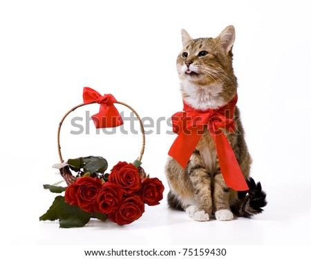 Cat with red bow sitting near red rose basket