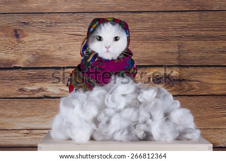 Cat with scarf sells his wool