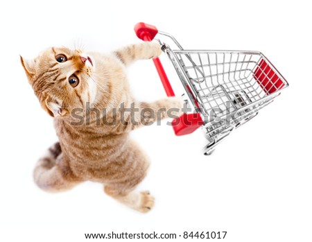 cat with shopping cart top view isolated on white - stock photo