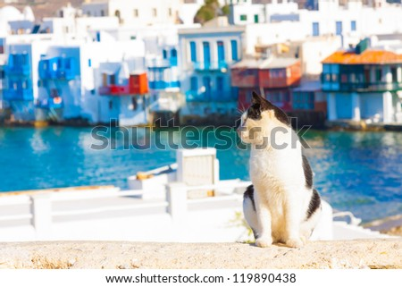 Cat with small Venice in background in Mykonos island Greece Cyclades
