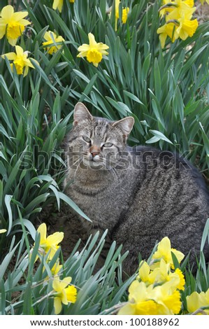 Cat with yellow flowers in garden