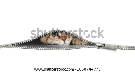 Photo of  cat with zipper hole isolated on white