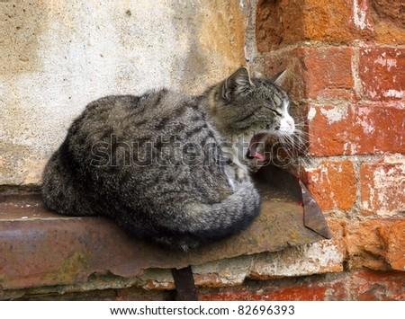 Cat yawns on a window sill - stock photo