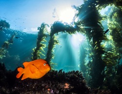 Catalina Island Scuba Diving