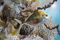 Catch of fish under sea,coral reef fish,aquatic and marine life