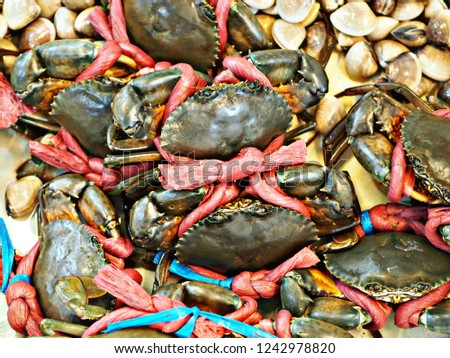 Catched Alive Crabs tied with red rope and some shells #1242978820