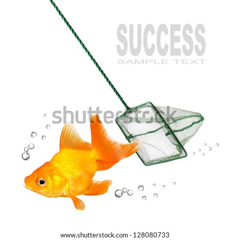 Catching of the goldfish. Success concept.