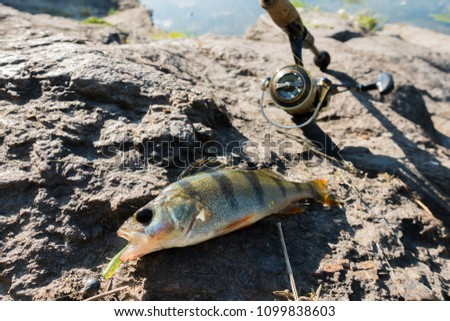 Catching perch on the river #1099838603