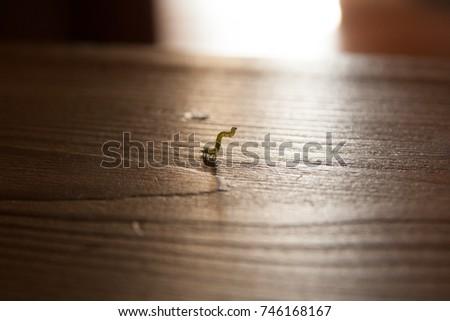 Caterpillar #746168167