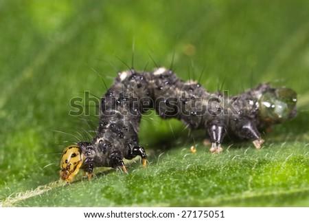 caterpillar at weird pose stock photo 27175051  shutterstock