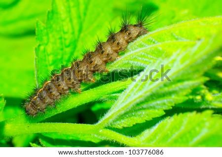 Promotion caterpillar identification