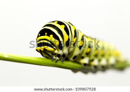 Caterpillar crawling on green twig