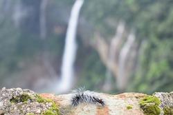 caterpillar infront of NohKaLikai Falls
