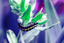 caterpillar is on the green leaves