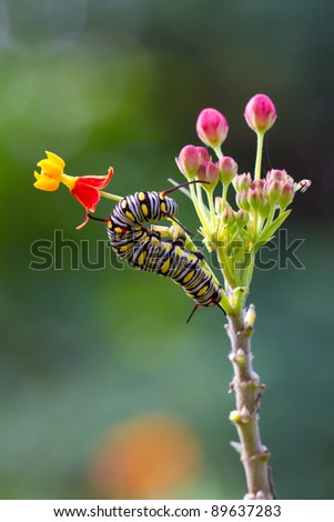 caterpillar on the flower
