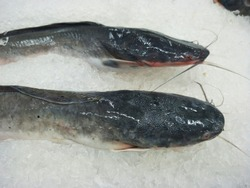 Catfish in Supermarket, Catfish in market, fish in market, Ruby Fish,Cooking With Fish, Fresh Fish