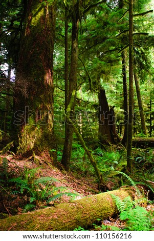 Cathedral Grove, old-growth forest Vancouver Island, British Columbia Canada