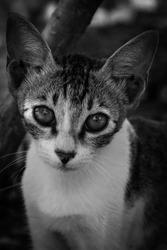 catlook cat feline kitten cateyes