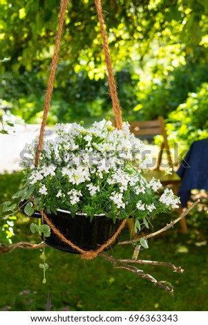 Catmint and Bornholm Marguerite with white blossoms in a creative styled hanging basket.