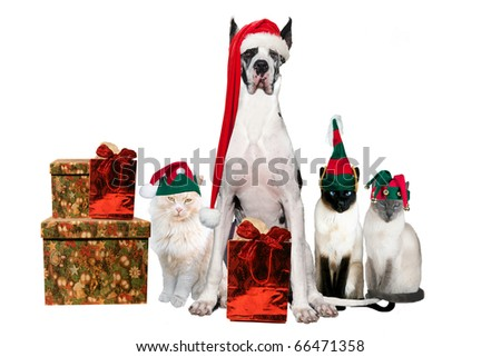 Cats and dog with with Christmas hats and gifts on a white background