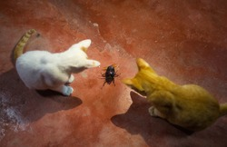 Cats and Giant black Bug on the red ground