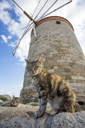 Cats at lighthouse and castle at Rhodes Town, Greece