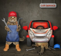 Cats auto mechanics with wrenches are fixing car in a garage.